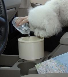 travel dog bowl that fits in your cup holder...awesome idea