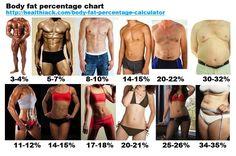 Body fat percentage calculator