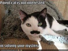 Poirot cat.