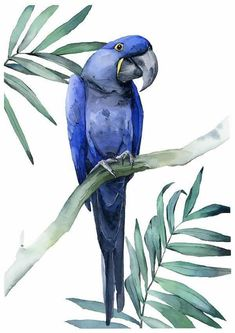 Blue macaw print by Polina Bright Watercolor Drawing, Watercolor Bird, Watercolor Animals, Watercolor Illustration, Painting & Drawing, Bird Drawings, Colorful Drawings, Animal Drawings, Parrot Painting