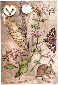 Owl art by Jane Tomlinson
