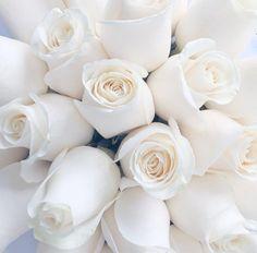 Belles rose blanche