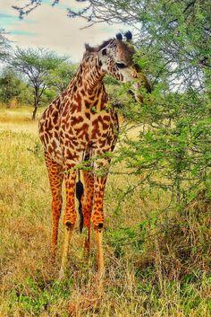 Beautiful animals in Tanzania.