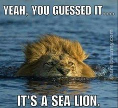 Funny Animal Pictures Of The Day 20 Pics - Funny Animal Quotes - - Funny Animal Pictures Of The Day 20 Pics The post Funny Animal Pictures Of The Day 20 Pics appeared first on Gag Dad. Animal Jokes, Funny Animal Memes, Cute Funny Animals, Funny Animal Pictures, Cat Memes, Funny Cute, Funny Memes, Animal Pics, Funny Lion