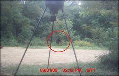 The Mahoneys of Jefferson County, Kentucky believe they have caught a picture of Bigfoot on their motion-sensitive camera, which they set up to find out where all their vegetables were disappearing to. This is what they caught: