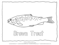 Common Trout Picture To Color 2 Brown Coloring Page With Outline Pictures