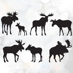 Moose SVG clipart Baby Moose SVG File Bull Moose SVG by Linescut