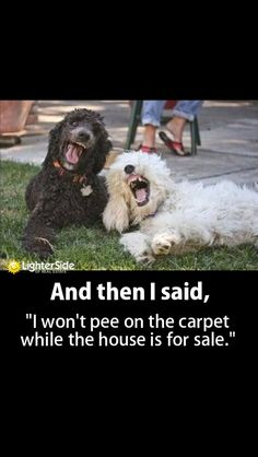 Lies that dogs tell