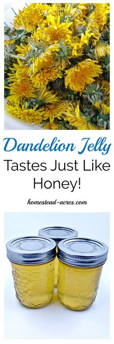 Dandelion jelly is simply amazing! It tastes just like honey with a hint of lemon. We just love this on toast, biscuits and even as a sweetener for herbal teas! A very easy flower jelly recipe to make. #Canning #JellyRecipes www.homestead-acres.com
