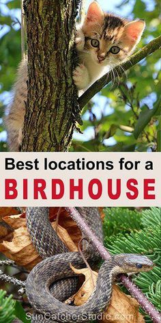 How to hang a birdhouse - including tips on placement, suitable nesting locations, and mounting a bird house. Bird House Plans, Bird House Kits, How To Build Abs, Birdhouse Designs, Bird Aviary, Easy Coffee, How To Attract Birds, Kinds Of Birds, Backyard Birds