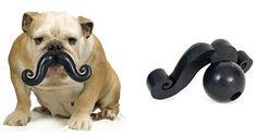 Buenas y santas. Quería compartir con ustedes  esto sobre decoración, tiene muy buenas ideas. Hasta pronto.  http://www.visitacasas.com/perros/los-materiales-importan-para-los-juguetes-de-los-perros-pequenos/