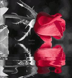 Image detail for -... , Animated Color Splash, Flowers, Keefers Pictures, Images and Photos