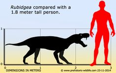 Facts and information about Rubidgea and thousands of other prehistoric creatures. Prehistoric Wildlife, Prehistoric World, Prehistoric Creatures, Thing 1, Knowledge, Drawings, Extinct, Skeletons, Artworks