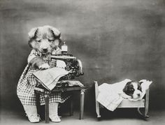 Dog photograph - sewing baby clothes by aged pixel. Baby Animals, Funny Animals, Cute Animals, Clever Animals, Dog Words, Gothic, Victorian Steampunk, Sewing Baby Clothes, Sewing Pants