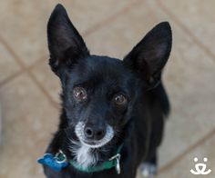 UT. Say hello to this week's Featured Adoptable Pet, Clank! This happy little senior loves to play with people — and dogs, too! Clank doesn't know his age and enjoys greeting people with his famous happy dance. He would love to find a forever home where he can show off his moves, nap and snuggle with you.   Could Clank be your new dance partner? As this week's featured adoptable, he flies home to you for free anywhere in the U.S. or Canada!