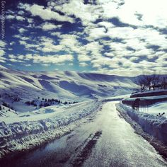Snow in Cedars..what do you think?  الثلج في الأرز...تعليقكم؟  By Michella tauk