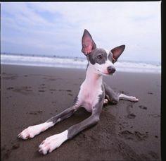 Most beautiful dog iv ever laid eyes on!