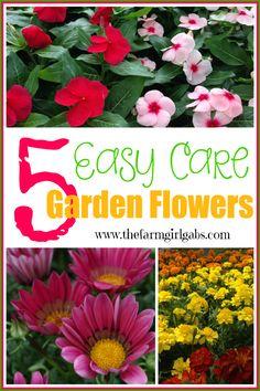 5 Low Maintenance Low Cost Easy Garden Flowers !