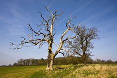 Dead Tree | Flickr - Photo Sharing!