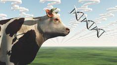 2017年、合成牛乳が市場に出るかもしれない:新しいヴィーガン/ 人造肉のハンバーガーに続いて、「試験管内で」牛乳やチーズ、魚をつくる研究が行われている。研究の領域はクツやカバンに用いる皮革にさえ及ぶ。いずれ「本物だけどヴィーガン」という不思議な考え方が現実になるだろう。