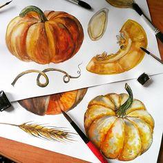 Watercolor pumpkins. #bykatevigdis #cansonpaper #canson #watercolor #vegetables #pumpkins #autumn #harvest #artwork #art #painting #traditionalart #watercolorvegetables #lovewatercolor