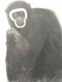 "Gibbon  Drawing, Simon Bussy, ""Gibbon"", circa 1920, pastel on paper, framed, glazed, 31.5 cm x 25 cm."
