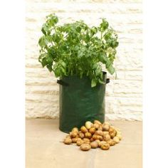 Buy Potato planter bags 3 pack - The Patio Planters are easy to use and reusable.: Delivery by Waitrose Garden in association with Crocus