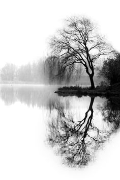 black and white lake view tree reflection Acrylic Landscape, Landscape Drawings, Landscape Art, Landscape Paintings, Acrylic Paintings, Landscape Design, Black And White Art Drawing, Black And White Tree, Black And White Pictures
