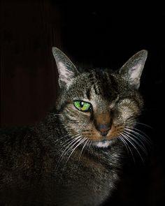 Goodbye Coco, my One-eyed Cat