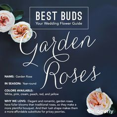 Bouquet Inspiration: Everything you need to know about garden roses