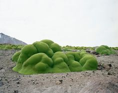 Rachel Sussman - the oldest living things