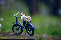 free art print of letter of daisies Miniature Photography, Cute Photography, Creative Photography, Cool Pictures For Wallpaper, Cute Pictures, Picsart, Whatsapp Dp Images, Cute Baby Dolls, Free Art Prints