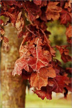 Herbst Bilder: Poster von Emotion-Art bei Posterlounge.de