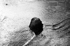 shoreline 12