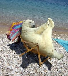 Oh, Behave!  Polar bear relaxing and stretching.   From CuteOverload.com