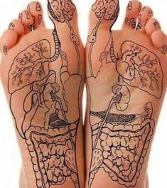 Foot reflexology charts show the location of reflex points on your feet. Through acupuncture and massage, applying pressure at these points can help heal ailments of the body. Massage Tips, Acupressure Treatment, Acupressure Points, Massage Therapy Certification, Yoga Position, Reflexology Massage, Medical Anatomy, Body Anatomy, Muscle Anatomy
