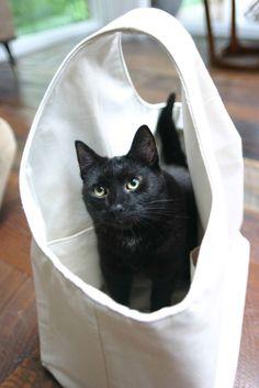 amy butler cats 1