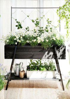 Raised garden, no trellis, to put herb garden close to kitchen window? Balcony Garden, Indoor Garden, Garden Plants, Indoor Plants, Outdoor Gardens, Indoor Planter Box, Terrace, Herb Garden, Planter Garden