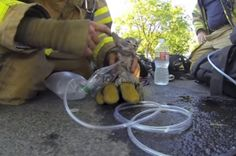 A fireman in Fresno, CA reviving a kitten that he scooped up from a burning home