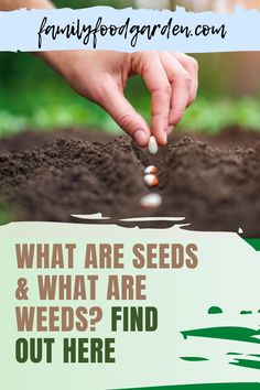 Do you want to know what are seeds and what are weeds? This is a common beginner question, and one that we get asked all the time. How do you know which seedlings are your food and which ones are weeds? Check this pin to know the difference! #seeds #weeds #gardening Healthy Fruits And Vegetables, Organic Vegetables, Gardening For Beginners, Gardening Tips, Vegetable Gardening, Beef Recipes, Real Food Recipes, Cooking Recipes, What Are Weeds