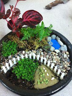 fairy garden...