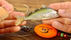 Top 3 Ways To Rig Live Croaker & The #1 Mistake To Avoid Best Fishing, Kayak Fishing, Fishing Tips, Fishing Videos, Red Fish, Saltwater Fishing, Rigs, Only In Texas, Good Presentation