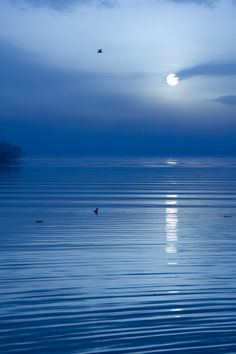 This is the most serene image ever, light sunset or moonlight splaying over a calm body of water!  Nothing in the world brings me to peace in nature quite like this