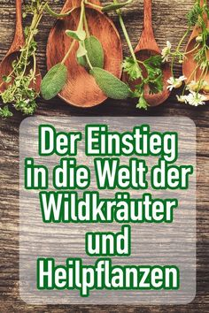The entry into the world of wild herbs and medicinal plants - Rezepte - Spiritual Reality, Little Gardens, Hand Care, Green Life, Medicinal Plants, Healthy Tips, Agriculture, Garden Plants, Medicine