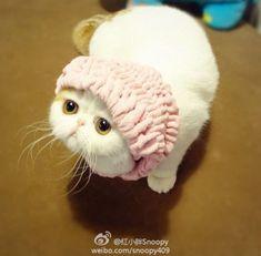 Snoopy Cat