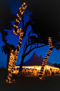Tent reception next to beach on Jekyll Island under the towering oaks. Lights in the trees surrounding the tent.