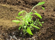 Downsizing the garden isn't any easier than enlarging it was 15 years ago. via @RobinFollette