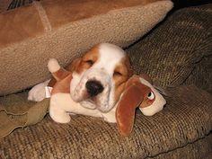 cuccioli-abbracciano-peluche-017