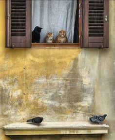 Alguien tendrá que quedarse sin comer =^.^= #gato #cat #negro #black