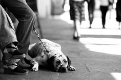 Elliott Erwitt Dogs | Dog Moment Classics - a gallery on Flickr